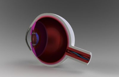 Solidworks model of the human eye for engineers
